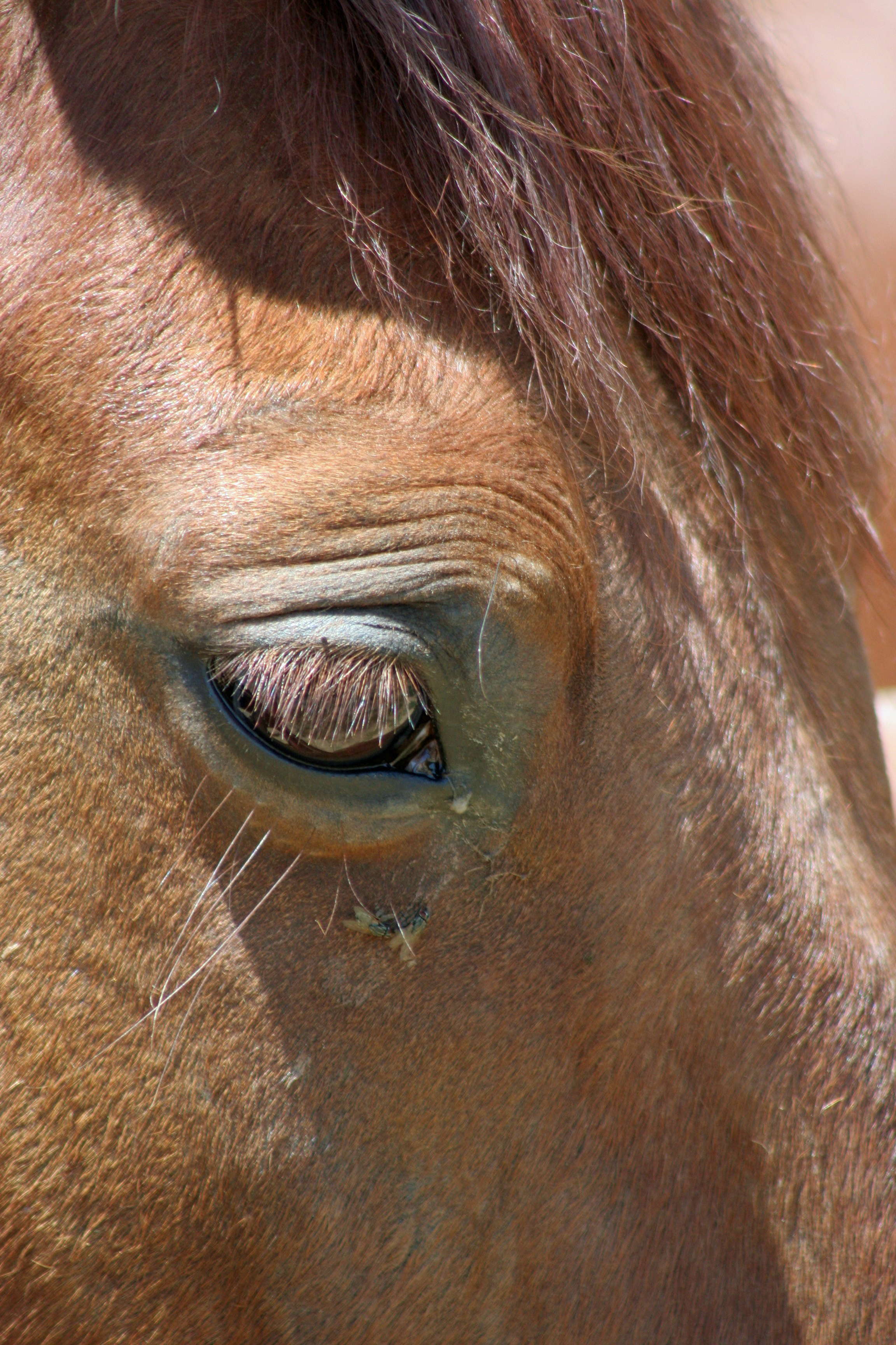 An Introduction To Common Eye Problems Impacting Horses Morgan