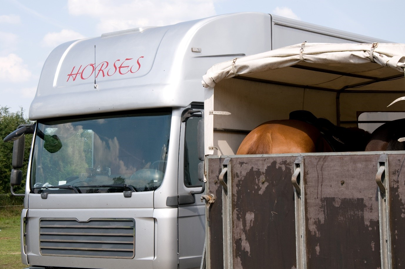 Travel Documents What You Must Know About Transporting Horses Between States Morgan Murphy S Blog Community Spalding Labs