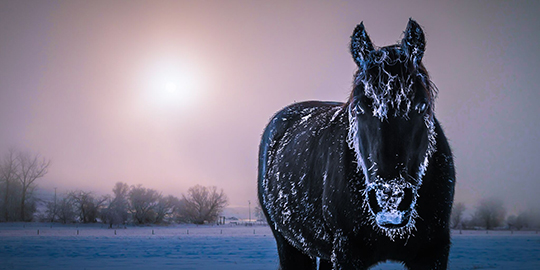 Ric Horst Winter Horse