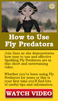 How to use fly predators video