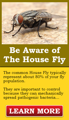 Be aware of the Common House Fly