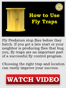 How to use fly traps video