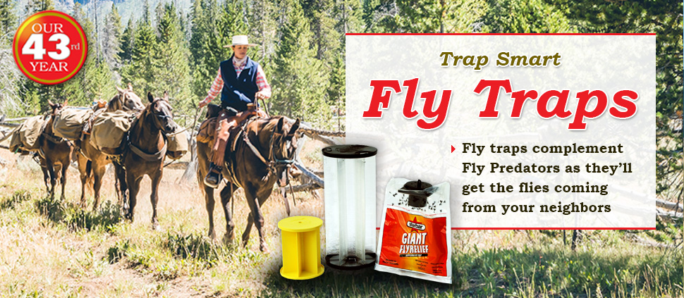 Pick The Right Traps For Better Fly Control - Fly Traps - Spalding Labs