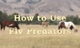 How To Use Fly Predators
