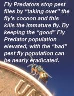 How Fly Predators Help Control Pest Flies.
