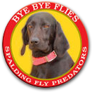 how to get rid of flies outside around dogs