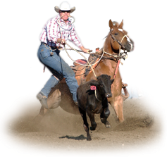Using Bye Bye Odor In The Horse Trailer Helped Control Horse Health Issues.